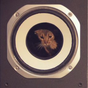 Synesthesia Cat